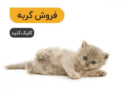 پتریزو | فروشگاه اینترنتی گربه|آرایشگاه حیوانات|بهترین فروشگاه گربه|فروش گربه cat2 صفحه اصلی