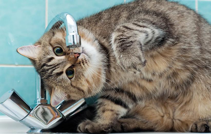 پتریزو | فروشگاه اینترنتی گربه|آرایشگاه حیوانات|بهترین فروشگاه گربه|فروش گربه آب-خوردن-گربه-ها روش هایی که باعث بیشتر آب خوردن گربه ها میشود سلامتی و بهداشت گربه ها  ظرف آبخوری گربه آبخوري اتوماتيك گربه آبخوری برقی گربه آبخوری اتوماتیک گربه و سگ آبخوری اتوماتیک گربه   فروش گربه