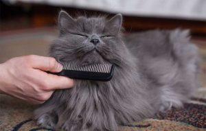 پتریزو | فروشگاه اینترنتی گربه|آرایشگاه حیوانات|بهترین فروشگاه گربه|فروش گربه -و-نظافت-گربه-ها-300x191 ریزش موی گربه بلاگ