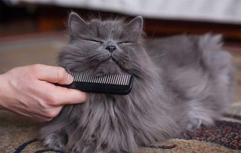 پتریزو | فروشگاه اینترنتی گربه|آرایشگاه حیوانات|بهترین فروشگاه گربه|فروش گربه -و-نظافت-گربه-ها آموزش ها و مقالات