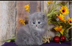 پتریزو | فروشگاه اینترنتی گربه|آرایشگاه حیوانات|بهترین فروشگاه گربه|فروش گربه -آمدن-گربه-نزد-شما-با-کلمه-3-300x191 آموزش آمدن گربه نزد شما با کلمه «بیا» آموزش گربه ها گفتن کلمه آمدن به گربه گربه حرف زدن با گربه آموزش گربه آموزش