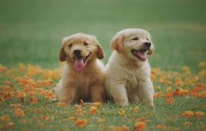 پتریزو | فروشگاه اینترنتی گربه|آرایشگاه حیوانات|بهترین فروشگاه گربه|فروش گربه -دادن-به-سگ-ها-1-300x191 نکات اصلی در تربیت سگ آموزش سگ ها تربیت سگ