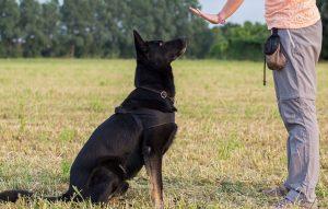 پتریزو | فروشگاه اینترنتی گربه|آرایشگاه حیوانات|بهترین فروشگاه گربه|فروش گربه -دادن-به-سگ-ها-300x191 ده نکته اساسی به هنگام آموزش دادن به سگ ها آموزش سگ ها تربیت سگ پا کوتاه تربیت سگ
