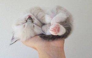 پتریزو | فروشگاه اینترنتی گربه|آرایشگاه حیوانات|بهترین فروشگاه گربه|فروش گربه -گربه-ها-2-300x191 گربه ها هم دوست دارند آموزش ببینند آموزش گربه ها یادگیری گربه گربه بازیگوشی گربه بازی کردن گربه آموزش گربه