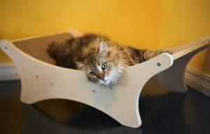 پتریزو | فروشگاه اینترنتی گربه|آرایشگاه حیوانات|بهترین فروشگاه گربه|فروش گربه -گربه-ها-300x191 شروع آموزش ها برای گربه خانگی شما آموزش گربه ها یادگیری گربه گربه خانگی آموزش گربه خانگی آموزش