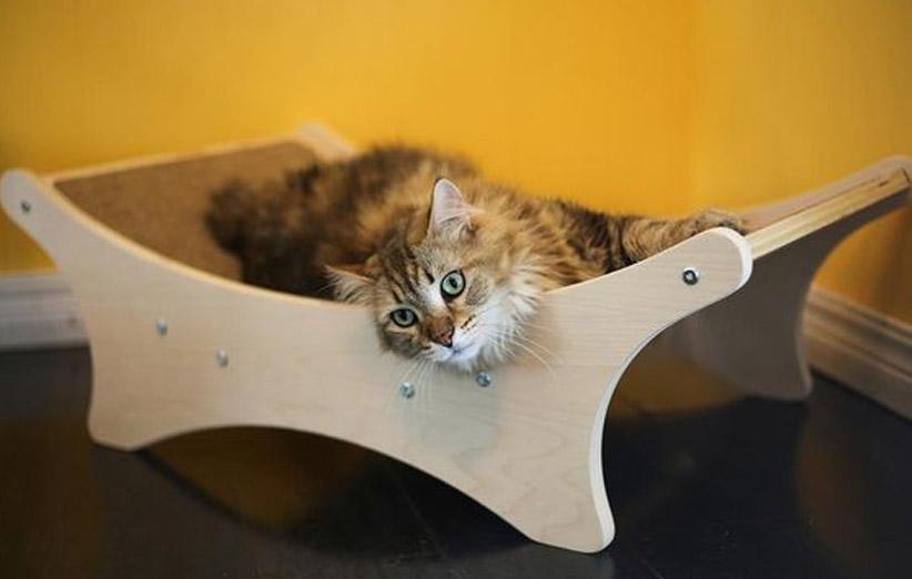 پتریزو | فروشگاه اینترنتی گربه|آرایشگاه حیوانات|بهترین فروشگاه گربه|فروش گربه -گربه-ها شروع آموزش ها برای گربه خانگی شما آموزش گربه ها یادگیری گربه گربه خانگی آموزش گربه خانگی آموزش
