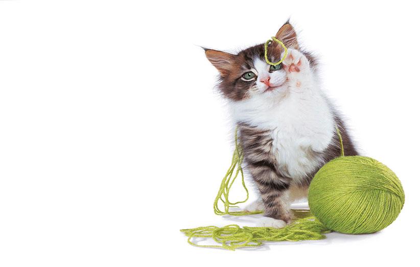 پتریزو | فروشگاه اینترنتی گربه|آرایشگاه حیوانات|بهترین فروشگاه گربه|فروش گربه -گربه-ها تحرک گربه ها و فرمان پذیری نگهداری و آشنایی با گربه ها رازهایی در مورد گربه ها