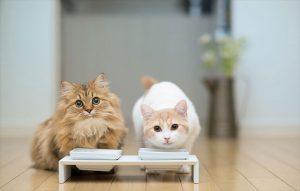پتریزو | فروشگاه اینترنتی گربه|آرایشگاه حیوانات|بهترین فروشگاه گربه|فروش گربه -گربه-300x191 نیازهای لازم در تغذیه گربه تغذیه و رژیم غذایی گربه ها میزان غذای گربه در روز غذای خانگی برای بچه گربه غذای ارزان برای گربه دستور غذایی خانگی برای گربه تغذیه مناسب برای گربه پای مرغ برای گربه
