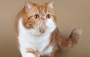پتریزو | فروشگاه اینترنتی گربه|آرایشگاه حیوانات|بهترین فروشگاه گربه|فروش گربه تمرین-هدف-برای-آموزش-گربه-ها-300x191 تمرین هدف برای آموزش گربه ها آموزش گربه ها  نگهداری گربه تمرین هدف برای آموزش گربه ها آموزش گربه ها   فروش گربه