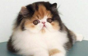 پتریزو | فروشگاه اینترنتی گربه|آرایشگاه حیوانات|بهترین فروشگاه گربه|فروش گربه -کردن-گربه-ها-300x191 تمیز کردن چشم ها، بینی و مقعد گربه ها سلامتی و بهداشت گربه ها نگهداری گربه نظافت گربه سلامت گربه تمیز کردن گربه بهداشت گربه