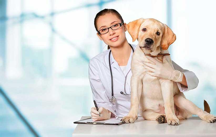 پتریزو   فروشگاه اینترنتی گربه آرایشگاه حیوانات بهترین فروشگاه گربه فروش گربه -ها،-کیسه-مقعدی-و-عقیم-سازی-در-سگ-ها دندان ها، کیسه مقعدی و عقیم سازی در سگ ها سلامتی و بهداشت سگ ها کیسه مقعدی سگ عقیم کردن سگ دندان های سگ