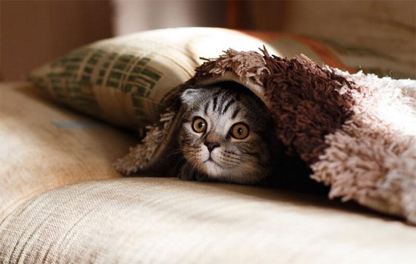 پتریزو | فروشگاه اینترنتی گربه|آرایشگاه حیوانات|بهترین فروشگاه گربه|فروش گربه -گربه سلامت گربه ها سلامتی و بهداشت گربه ها نظافت گربه گربه مریض کنه گربه