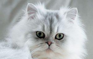 پتریزو | فروشگاه اینترنتی گربه|آرایشگاه حیوانات|بهترین فروشگاه گربه|فروش گربه -دامپزشکی-درباره-گربه-ها--300x191 پیشرفت علم دامپزشکی درباره گربه ها سلامتی و بهداشت گربه ها گربه گربه علم دامپزشکی در مورد گربه سلامتی گرب درمان گربه بیماری گربه آموزش گربه