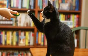 پتریزو | فروشگاه اینترنتی گربه|آرایشگاه حیوانات|بهترین فروشگاه گربه|فروش گربه -به-گربه-ها-300x191 آموزش فرمان بیا به گربه ها در محیط شلوغ آموزش گربه ها گاز گرفتن گربه قهر گربه ها