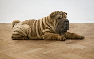 پتریزو | فروشگاه اینترنتی گربه|آرایشگاه حیوانات|بهترین فروشگاه گربه|فروش گربه -دراز-بکش-به-سگ-ها-300x191 آموزش فرمان دراز بکش به سگ ها آموزش سگ ها تربیت سگ