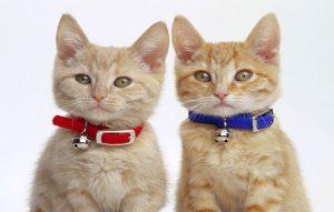 پتریزو | فروشگاه اینترنتی گربه|آرایشگاه حیوانات|بهترین فروشگاه گربه|فروش گربه -پذیری-در-گربه-ها-300x191 آموزش فرمان بشین به گربه ها آموزش گربه ها ده فرمان به گربه آموزش گربه