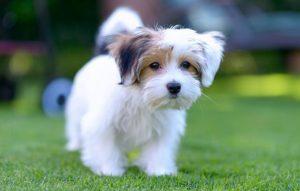پتریزو | فروشگاه اینترنتی گربه|آرایشگاه حیوانات|بهترین فروشگاه گربه|فروش گربه -های-بیماری-در-سگ-ها-300x191 نشانه های بیماری در سگ ها سلامتی و بهداشت سگ ها نگهداری سگ ها علایم بیماری در سگ ها بیماری سگ ها آشنایی با سگ ها