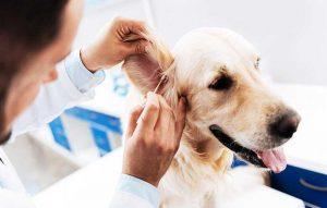 پتریزو | فروشگاه اینترنتی گربه|آرایشگاه حیوانات|بهترین فروشگاه گربه|فروش گربه نشانه-های-بیماری-در-سگ-300x191 نشانه های بیماری در سگ سلامتی و بهداشت سگ ها  نشانه های بیماری در سگ مدفوع خواری در سگ ها   فروش گربه