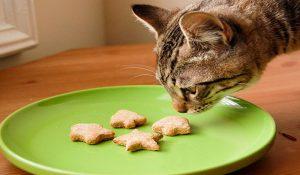 پتریزو | فروشگاه اینترنتی گربه|آرایشگاه حیوانات|بهترین فروشگاه گربه|فروش گربه -300x175 درباره غذای مناسب گربه چه می دانید؟ تغذیه و رژیم غذایی گربه ها غذای مناسب گربه غذای گربه انواع مواد غذایی مناسب گربه