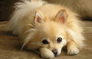 پتریزو | فروشگاه اینترنتی گربه|آرایشگاه حیوانات|بهترین فروشگاه گربه|فروش گربه -پزشکی-سگ-ها-300x191 چکاپ پزشکی سگ ها سلامتی و بهداشت سگ ها سلامتی سگ ها سگ بیماری سگ آشنایی با سگ ها