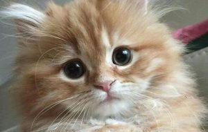 پتریزو | فروشگاه اینترنتی گربه|آرایشگاه حیوانات|بهترین فروشگاه گربه|فروش گربه -اشتها-در-گربه-ها-300x191 کاهش اشتها در گربه ها نگهداری و آشنایی با گربه ها نگهداری گربه کاهش اشتها گربه سلامتی گربه بهداشت گربه