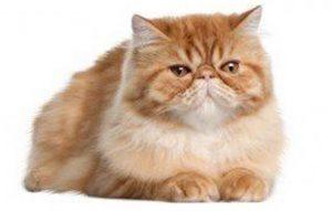 پتریزو | فروشگاه اینترنتی گربه|آرایشگاه حیوانات|بهترین فروشگاه گربه|فروش گربه -کردن-ناخن-گربه-300x191 کوتاه کردن ناخن های گربه ها سلامتی و بهداشت گربه ها سلامت گربه ها بهداشت گربه ها نگهداری گربه ها تمیز کردن گربه ها نظافت حیوانات خانگی