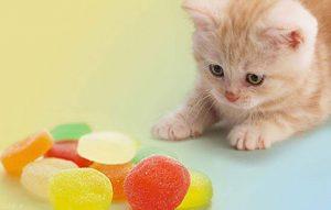 پتریزو | فروشگاه اینترنتی گربه|آرایشگاه حیوانات|بهترین فروشگاه گربه|فروش گربه -ی-خانگی-300x191 نکاتی مهم درباره ی زندگی گربه ها نظافت حیوانات خانگی متن در مورد گربه روانشناسی گربه ها رفتار گربه ها رازهایی در مورد گربه ها دشمن گربه ها خصوصیات گربه ها آیا گربه ها قهر می کنند