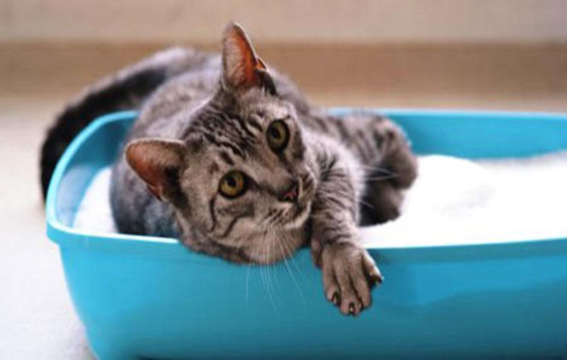 پتریزو | فروشگاه اینترنتی گربه|آرایشگاه حیوانات|بهترین فروشگاه گربه|فروش گربه 10301_640 نکاتی مهم درباره ی زندگی گربه ها نظافت حیوانات خانگی  متن در مورد گربه روانشناسی گربه ها رفتار گربه ها رازهایی در مورد گربه ها دشمن گربه ها خصوصیات گربه ها آیا گربه ها قهر می کنند   فروش گربه