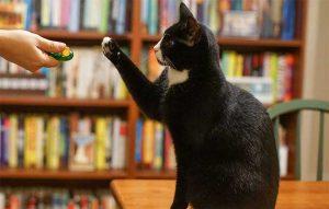 پتریزو | فروشگاه اینترنتی گربه|آرایشگاه حیوانات|بهترین فروشگاه گربه|فروش گربه آموزش-فرمان-بشین-بمان-به-گربه-ها-300x191 آموزش فرمان بشین-بمان به گربه ها آموزش گربه ها  آموزش فرمان بشین - بمان به گربه ها   فروش گربه