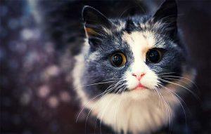 پتریزو | فروشگاه اینترنتی گربه|آرایشگاه حیوانات|بهترین فروشگاه گربه|فروش گربه -فرمان-بمان-با-دور-شدن-گربه-ها-300x191 فرمان بمان با دور شدن گربه آموزش گربه ها فرمان بمان با دور شدن گربه