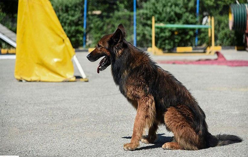 پتریزو   فروشگاه اینترنتی گربه آرایشگاه حیوانات بهترین فروشگاه گربه فروش گربه -بشین-به-سگ آموزش فرمان بایست به سگ ها آموزش سگ ها آموزش نگهداری سگ آموزش فرمان بیا به سگ