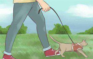 پتریزو | فروشگاه اینترنتی گربه|آرایشگاه حیوانات|بهترین فروشگاه گربه|فروش گربه نکات-مهم-پیاده-روی-با-گربه-ها-300x191 نکات مهم پیاده روی با گربه آموزش گربه ها  نکات مهم پیاده روی با گربه نکات پیاده روی بیرون از خانه   فروش گربه