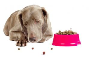 پتریزو | فروشگاه اینترنتی گربه|آرایشگاه حیوانات|بهترین فروشگاه گربه|فروش گربه -امتناع-از-خوردن-غذا-به-سگ-300x191 آموزش امتناع از خوردن غذا به سگ آموزش سگ ها آموزش امتناع از خوردن غذا به سگ