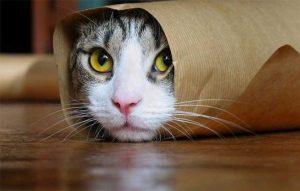 پتریزو | فروشگاه اینترنتی گربه|آرایشگاه حیوانات|بهترین فروشگاه گربه|فروش گربه دانستنیهای-مهم-در-مورد-گربهها-300x191 دانستنیهای مهم در مورد گربهها (بخش3) گربه نگهداری و آشنایی با گربه ها  دانستنیهای مهم در مورد گربهها   فروش گربه