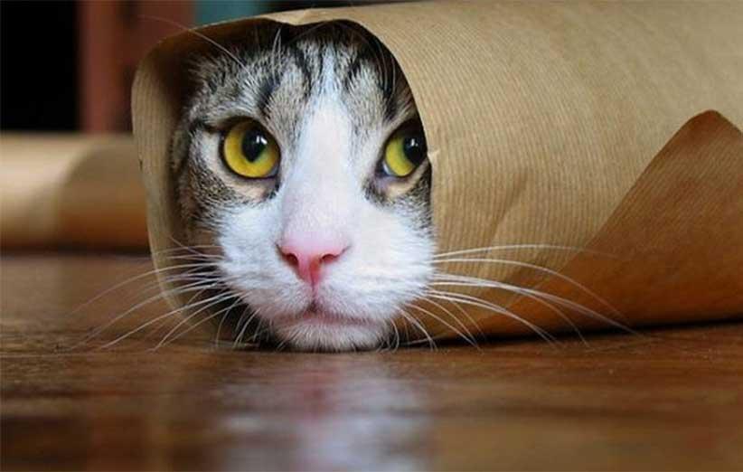 پتریزو | فروشگاه اینترنتی گربه|آرایشگاه حیوانات|بهترین فروشگاه گربه|فروش گربه -مهم-در-مورد-گربهها دانستنیهای مهم در مورد گربهها (بخش3) گربه نگهداری و آشنایی با گربه ها دانستنیهای مهم در مورد گربهها