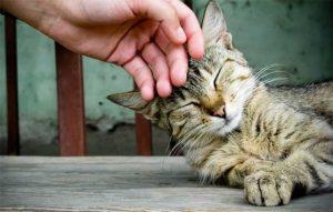 پتریزو | فروشگاه اینترنتی گربه|آرایشگاه حیوانات|بهترین فروشگاه گربه|فروش گربه -آموزش-نوازش-گربه-همسایه-300x191 نیازهای غذایی گربه بلاگ