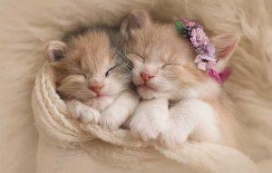 پتریزو | فروشگاه اینترنتی گربه|آرایشگاه حیوانات|بهترین فروشگاه گربه|فروش گربه -لازم-جهت-نگهداری-اصولی-تر-بچه-گربه-ها-300x191 غذای گربه بلاگ