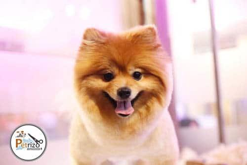 پتریزو | فروشگاه اینترنتی گربه|آرایشگاه حیوانات|بهترین فروشگاه گربه|فروش گربه WhatsApp-Image-2019-10-12-at-17.29.28 صفحه اصلی