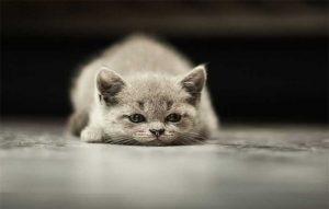 پتریزو | فروشگاه اینترنتی گربه|آرایشگاه حیوانات|بهترین فروشگاه گربه|فروش گربه -هدف-گربه-300x191 غذای خانگی گربه بلاگ