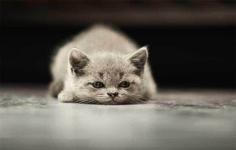 پتریزو | فروشگاه اینترنتی گربه|آرایشگاه حیوانات|بهترین فروشگاه گربه|فروش گربه آموزش-هدف-گربه آموزش ها و مقالات    فروش گربه