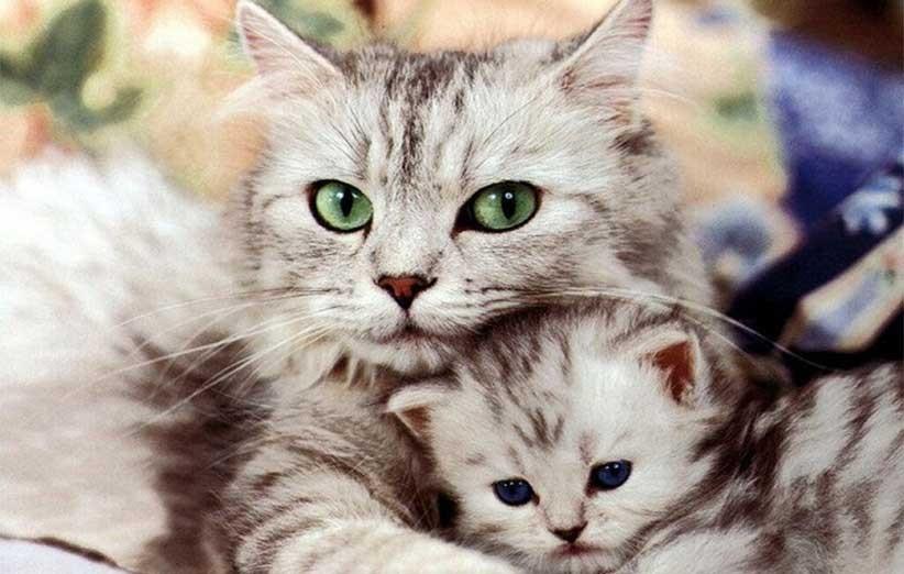 پتریزو | فروشگاه اینترنتی گربه|آرایشگاه حیوانات|بهترین فروشگاه گربه|فروش گربه آنچه-در-رابطه-با-گربهها-باید-بدانید آموزش ها و مقالات    فروش گربه