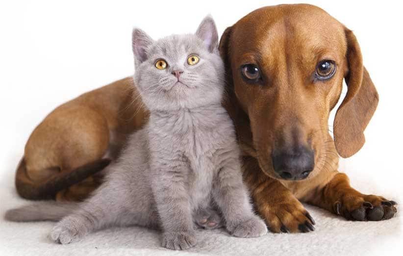 پتریزو | فروشگاه اینترنتی گربه|آرایشگاه حیوانات|بهترین فروشگاه گربه|فروش گربه آیا-سگ-ها-مهربان-هستند-یا-گربه-ها؟ آیا سگ ها مهربان هستند یا گربه ها؟ گربه نگهداری و آشنایی با گربه ها    فروش گربه