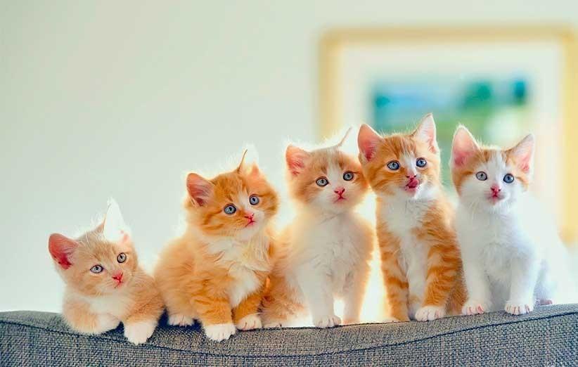پتریزو | فروشگاه اینترنتی گربه|آرایشگاه حیوانات|بهترین فروشگاه گربه|فروش گربه اهمیت-خانواده-در-گربه-ها آموزش ها و مقالات    فروش گربه
