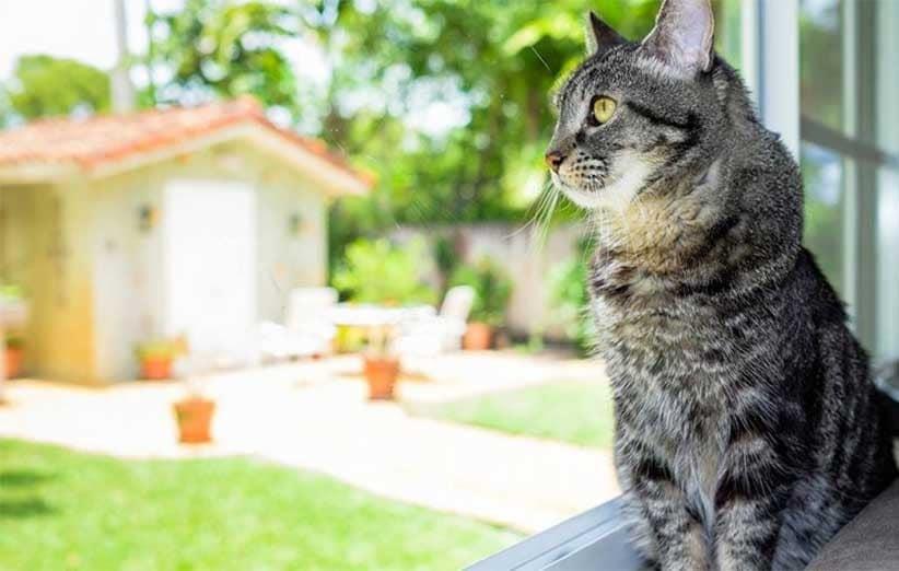 پتریزو | فروشگاه اینترنتی گربه|آرایشگاه حیوانات|بهترین فروشگاه گربه|فروش گربه -کردن-خانه-برای-گربه آموزش ها و مقالات