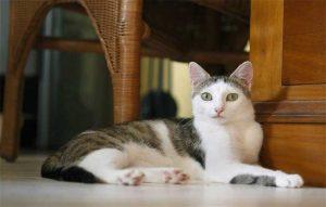 پتریزو | فروشگاه اینترنتی گربه|آرایشگاه حیوانات|بهترین فروشگاه گربه|فروش گربه تحلیل-رفتارهای-گربه-300x191 آموزش ها و مقالات    فروش گربه