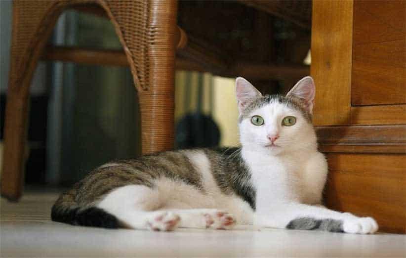 پتریزو | فروشگاه اینترنتی گربه|آرایشگاه حیوانات|بهترین فروشگاه گربه|فروش گربه -رفتارهای-گربه آموزش ها و مقالات