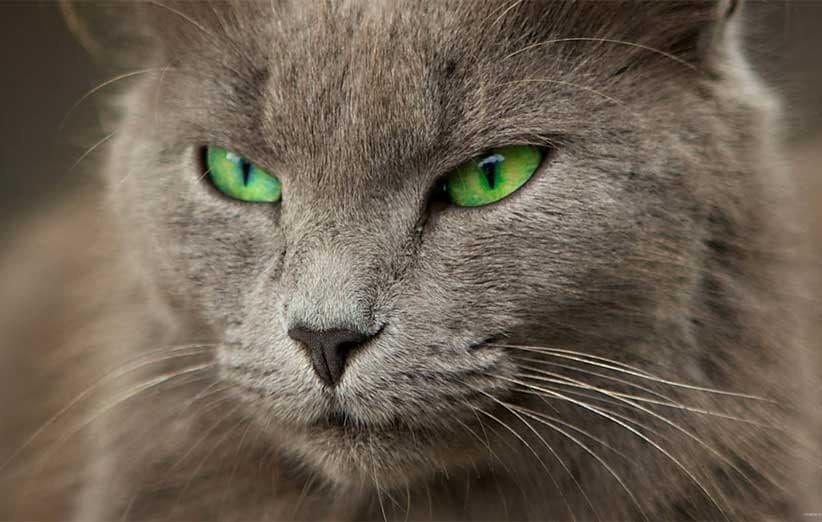 پتریزو   فروشگاه اینترنتی گربه آرایشگاه حیوانات بهترین فروشگاه گربه فروش گربه ترسناک-شدن-صورت-و-نگاه-گربه آموزش ها و مقالات    فروش گربه