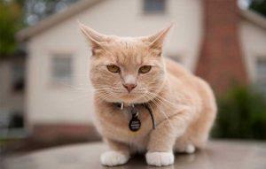 پتریزو | فروشگاه اینترنتی گربه|آرایشگاه حیوانات|بهترین فروشگاه گربه|فروش گربه -گربه-ها-را-بدانید-300x191 آموزش ها و مقالات