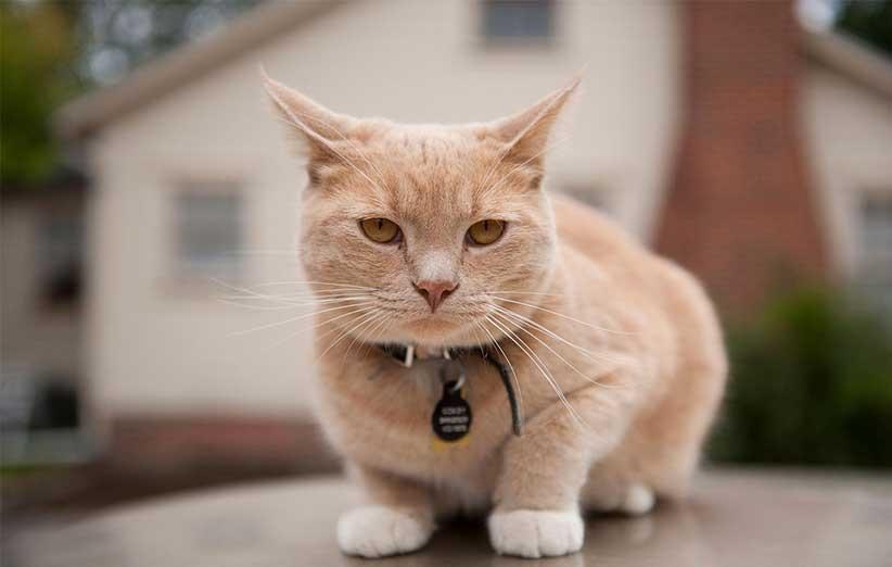 پتریزو | فروشگاه اینترنتی گربه|آرایشگاه حیوانات|بهترین فروشگاه گربه|فروش گربه -گربه-ها-را-بدانید نژاد گربه های پرشین 2 بلاگ