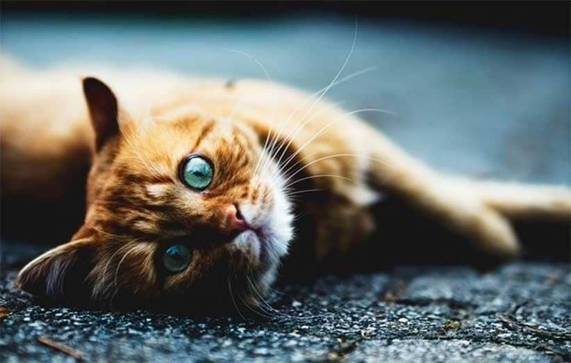 پتریزو   فروشگاه اینترنتی گربه آرایشگاه حیوانات بهترین فروشگاه گربه فروش گربه دیوانه-بازی-های-شبانه-گربه-ها آموزش ها و مقالات    فروش گربه